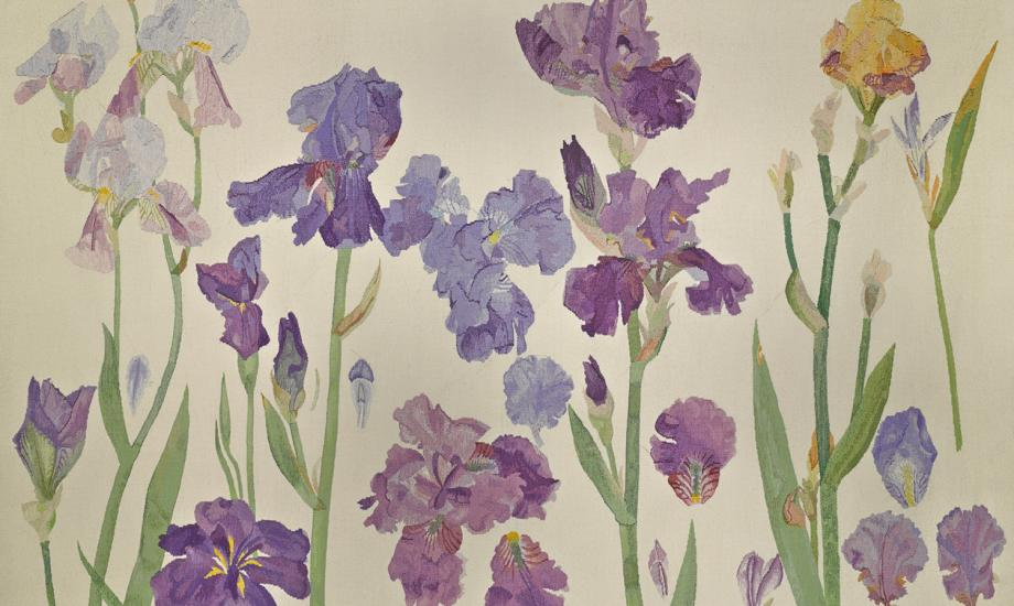 Irises, 198, Dame Elizabeth Blackadder c Fleming Collection