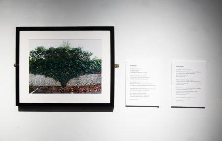 Image of photograph of a tree taken by participant of the Depth of Me project