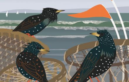 starlings at mudeford