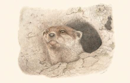 Drawn image of an otter