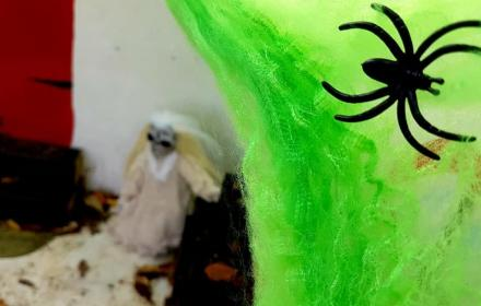 Spooky black spider on green webbing