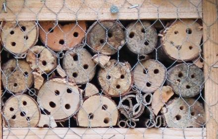 Cancelled Make a Bug Hotel